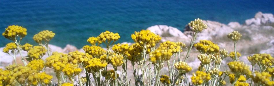 Aromatsko bilje