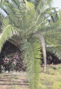 Suha grana na zelenoj krošnji