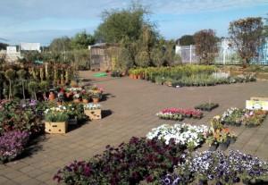 pogled na Vrtni centar Vrt - Express