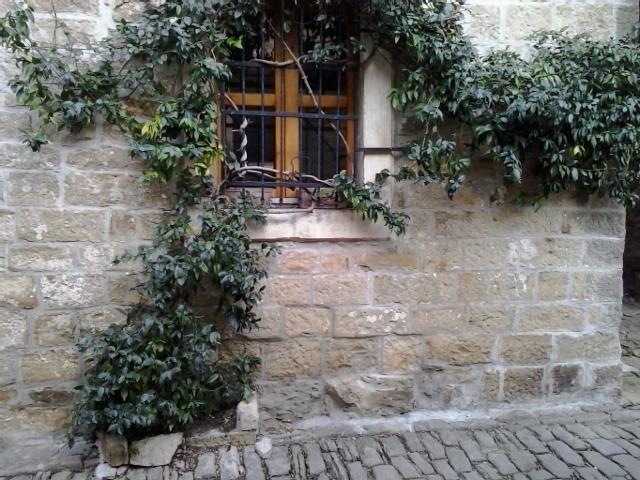 Zimzeleni jasmin / zimski jasmin u kamenu - Rhinospermum jasminoides